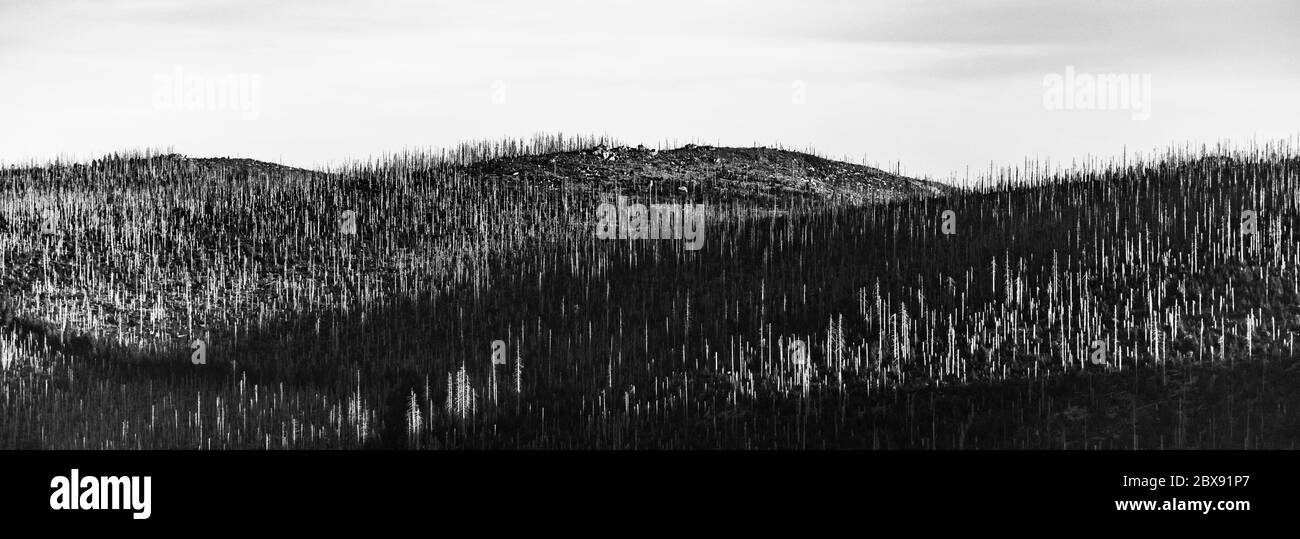 Devasted forest in caues of bark beetle infestation. Sumava National Park and Bavarian Forest, Czech republic and Germany. View from Tristolicnik, Dreisesselberg, to Plechy, Plockenstein. Black and white image. Stock Photo