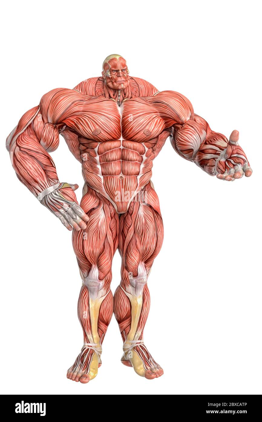 muscle maps of a strong man demonstrating. This guy in clipping ...