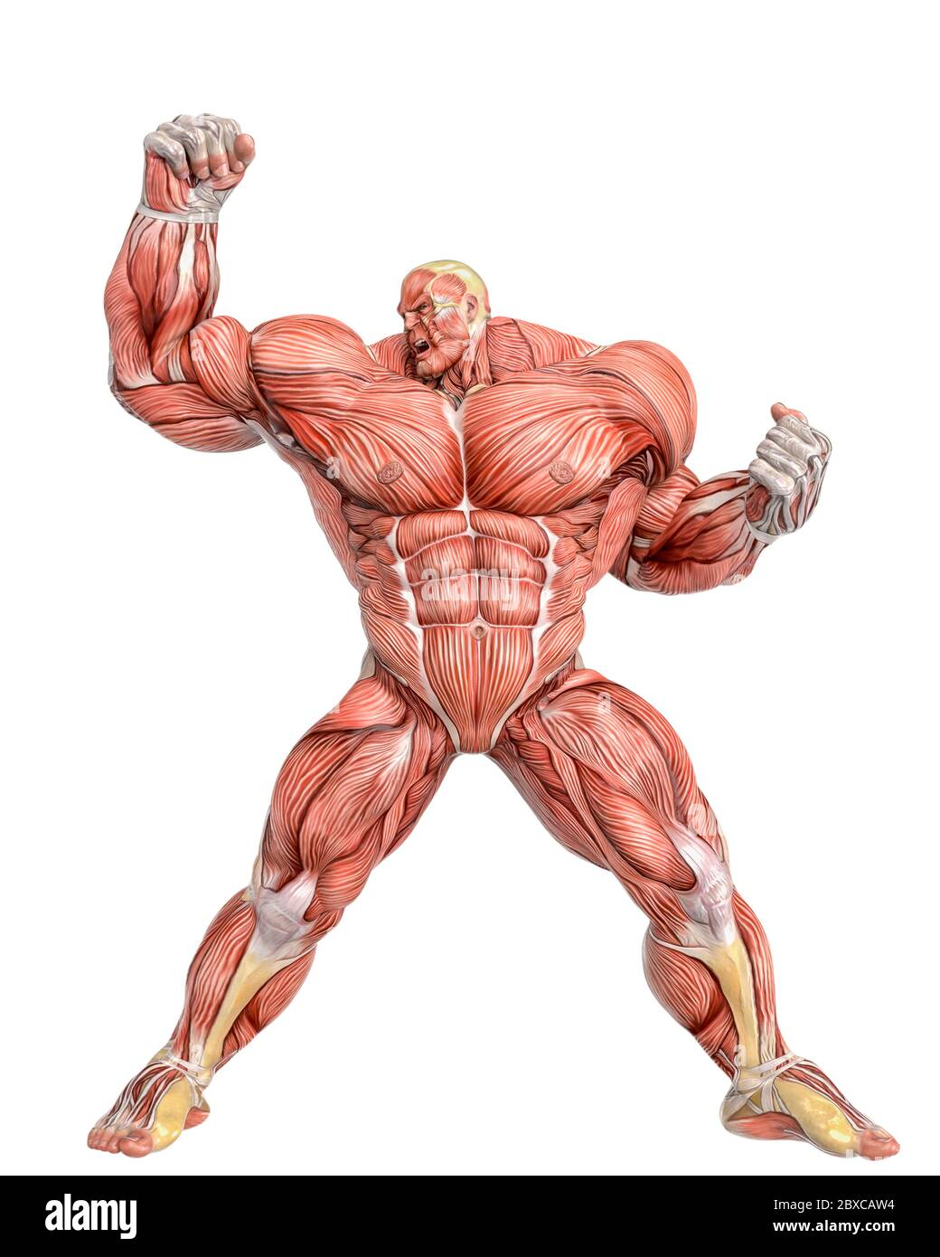 muscle maps of a strong man doing a super power pose. This guy in ...