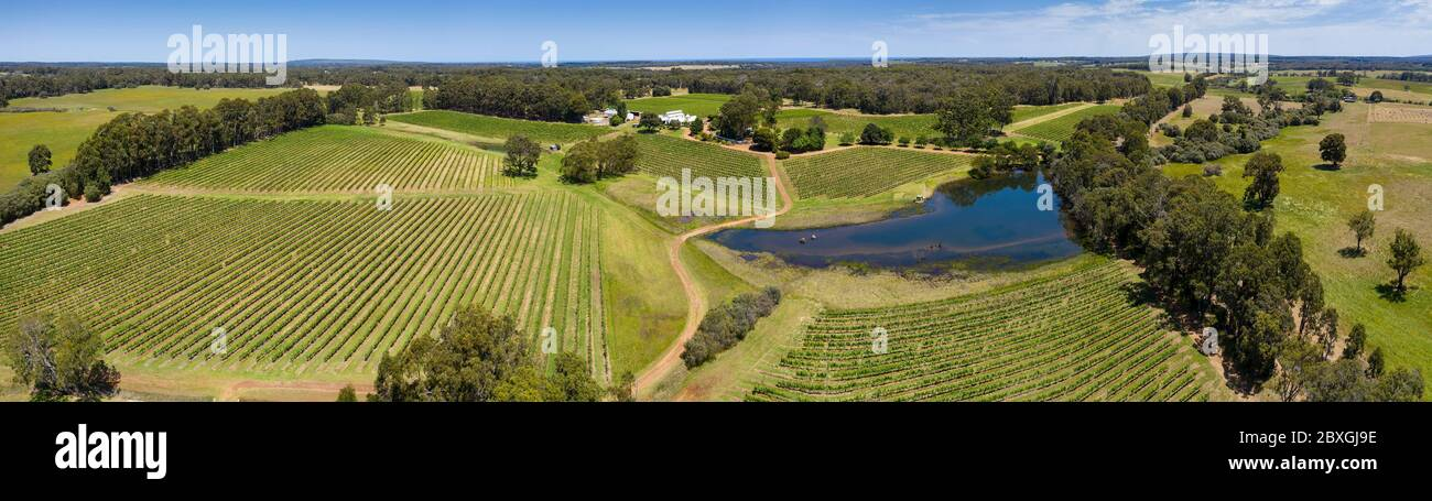Aerial view of a typical vineyard in the Margaret River region of Western Australia, south of Perth Stock Photo