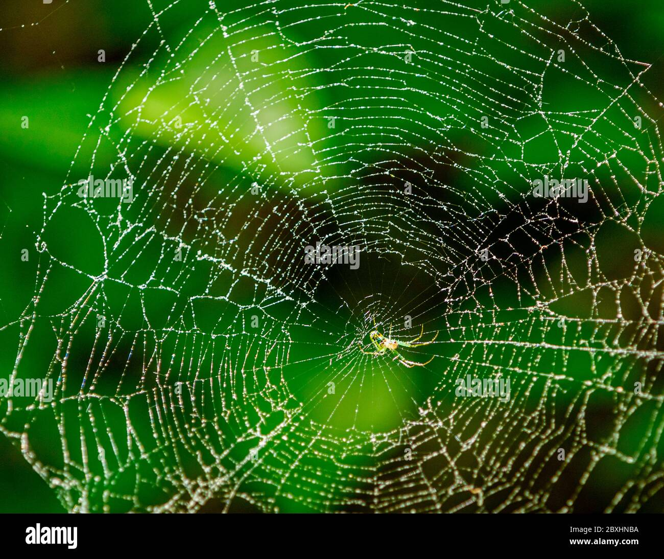Close up of a spider in its web Stock Photo