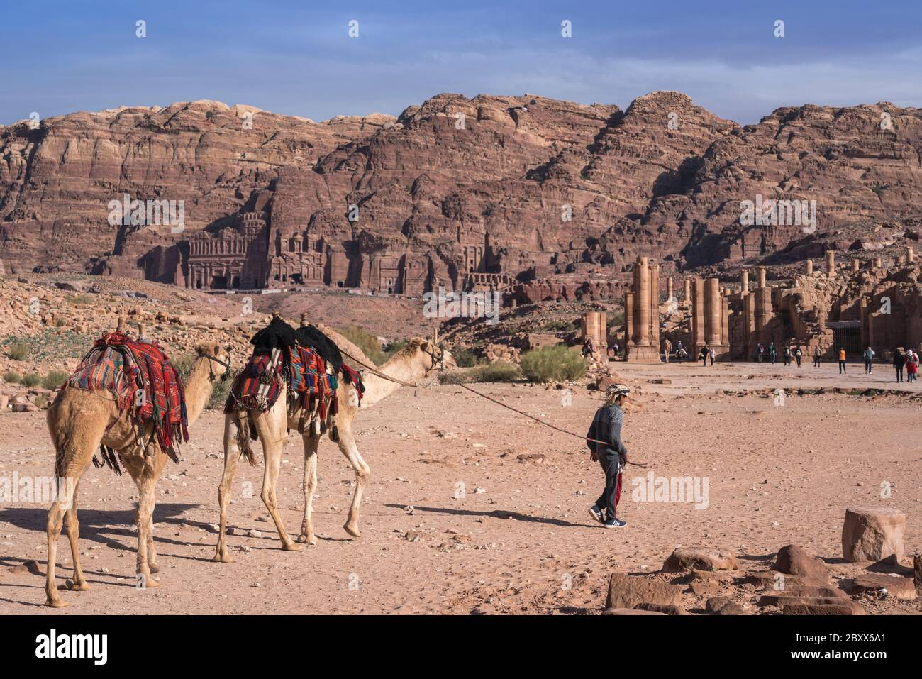 Guide leads camels for tourist ride in Petra, Jordan. Stock Photo