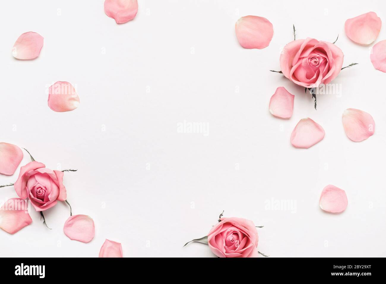 Pastel Pink Roses Frame On White Background Beautiful Flower Arrangement For Your Design Stock Photo Alamy