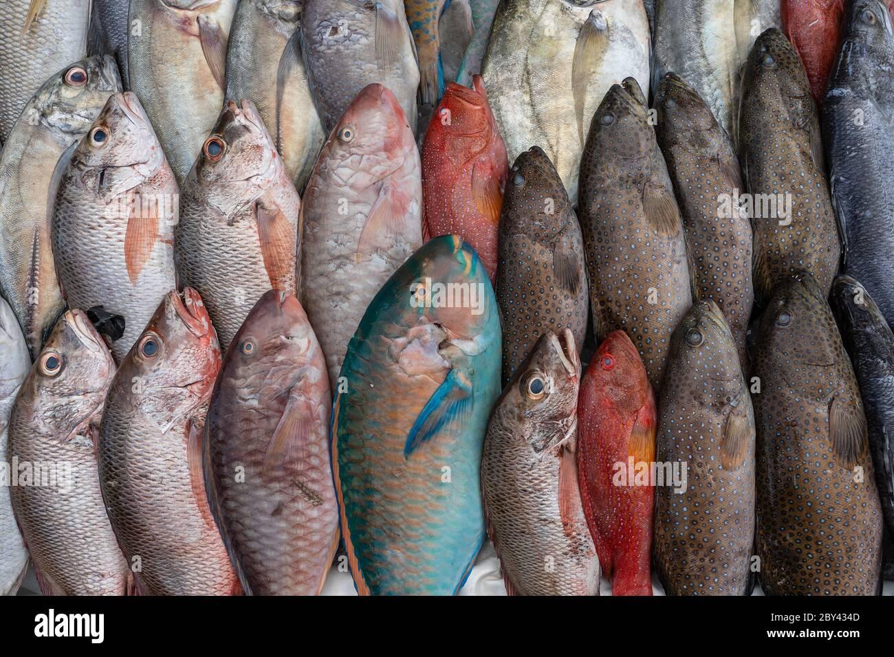 Fresh sea fish for sell at the street food market in Kota Kinabalu, island Borneo, Malaysia, close up seafood Stock Photo