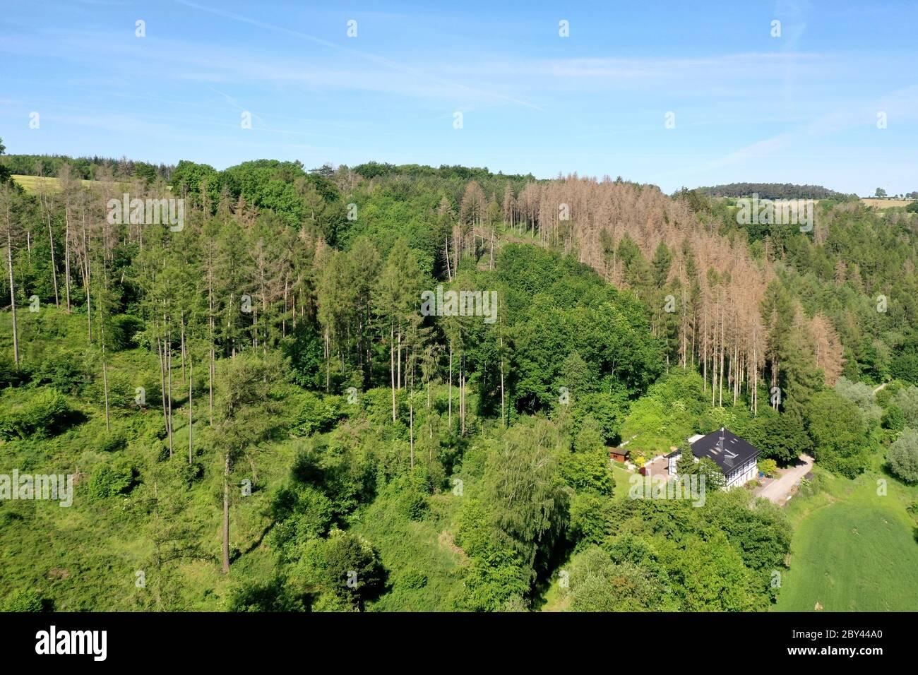 Fichten, Fichte sind vertrocknet und durch Borkenkäfer geschädigt, Fichtenwald, Fichtenwälder, Nadelwälder, Nadelwald, Fichtensterben, Waldsterben, Kl Stock Photo