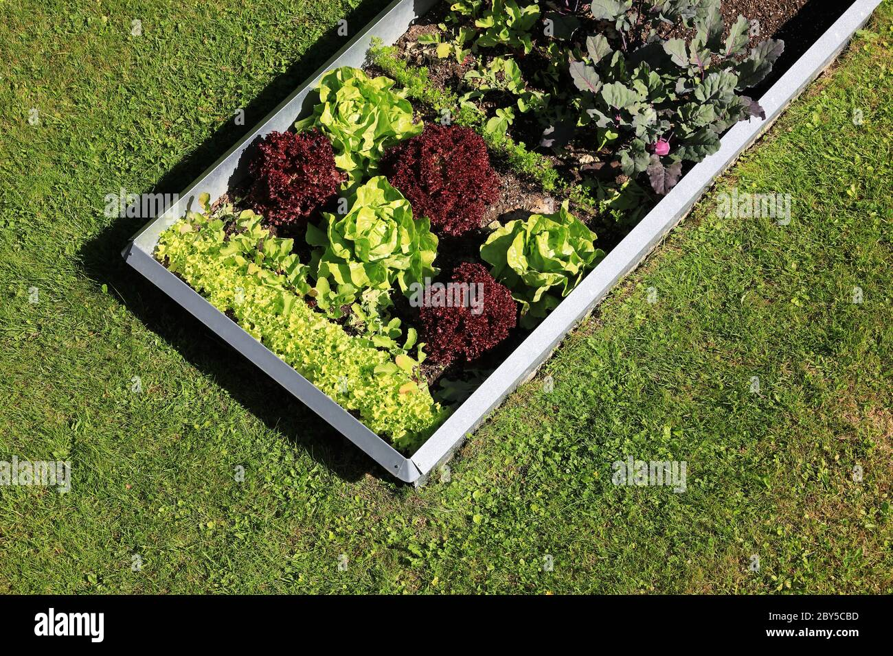 Garden with organic lettuce salad and vegetables and slug protection fence Stock Photo