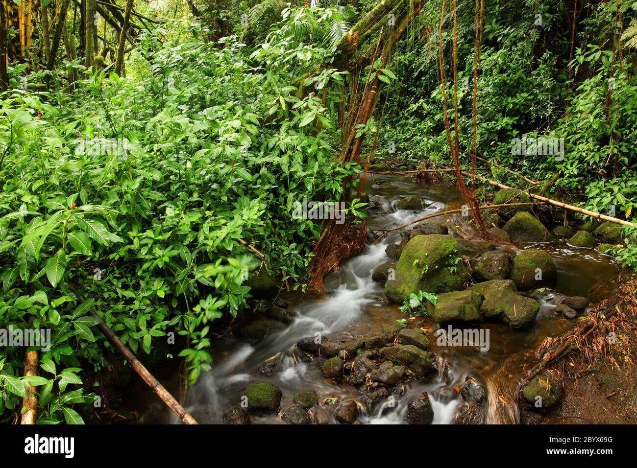 Scenic landscape with water stream inside rainforest. Akaka Falls State Park, Hawaii Big Island, USA. Stock Photo