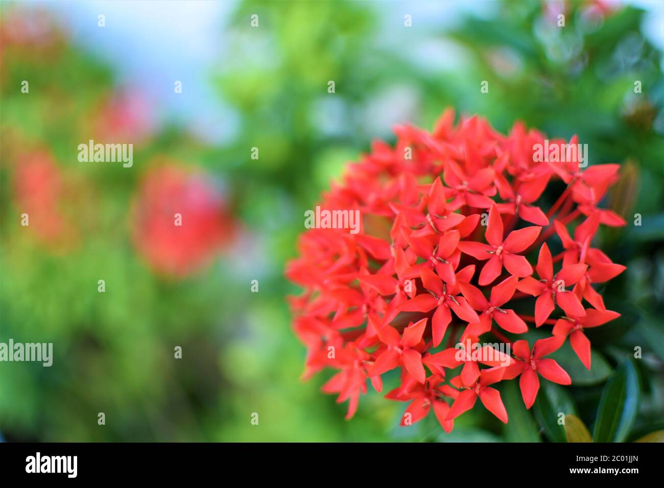 Santan High Resolution Stock Photography and Images - Alamy