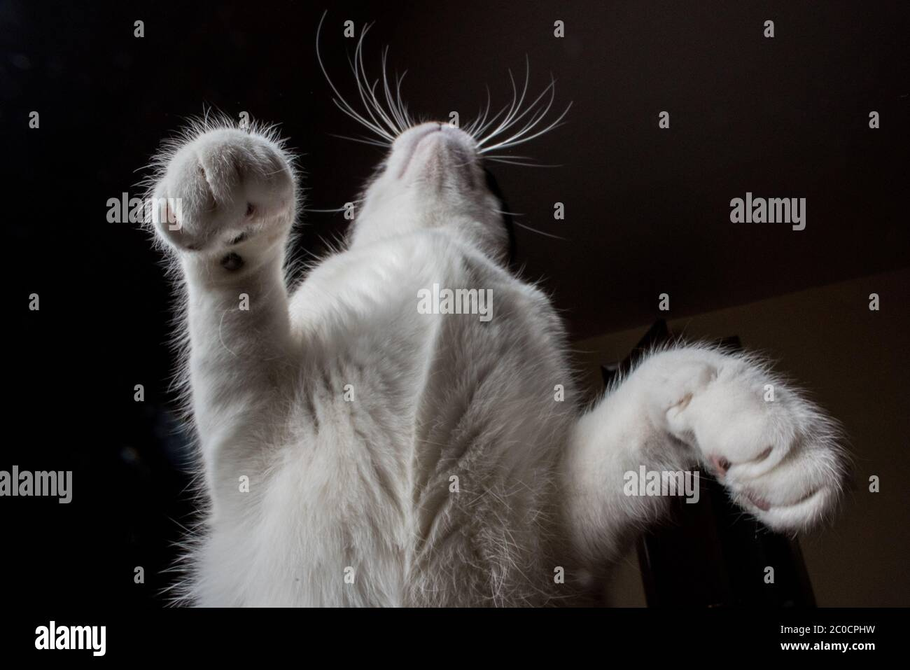 A black and white cat seen from below Stock Photo