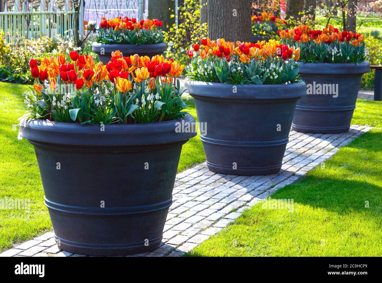 Big Flowerpots High Resolution Stock Photography And Images Alamy