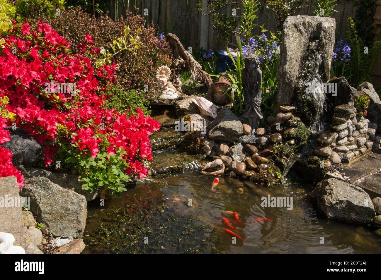 Pond Layout High Resolution Stock Photography And Images Alamy