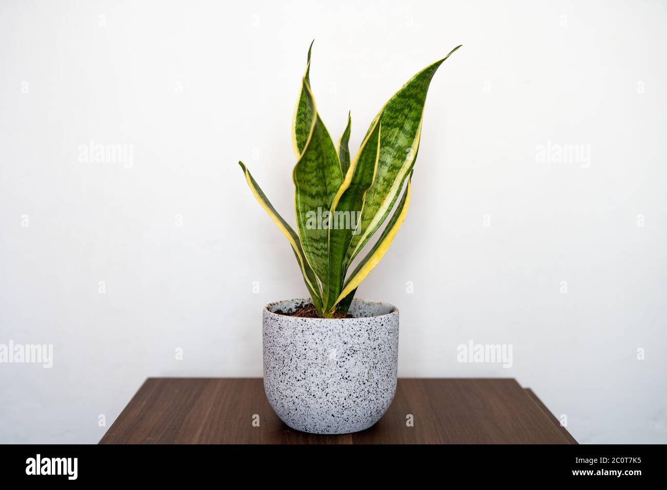 Mother In Laws Tongue Indoor House Plant Stock Photo Alamy,When Are Strawberries In Season In Australia