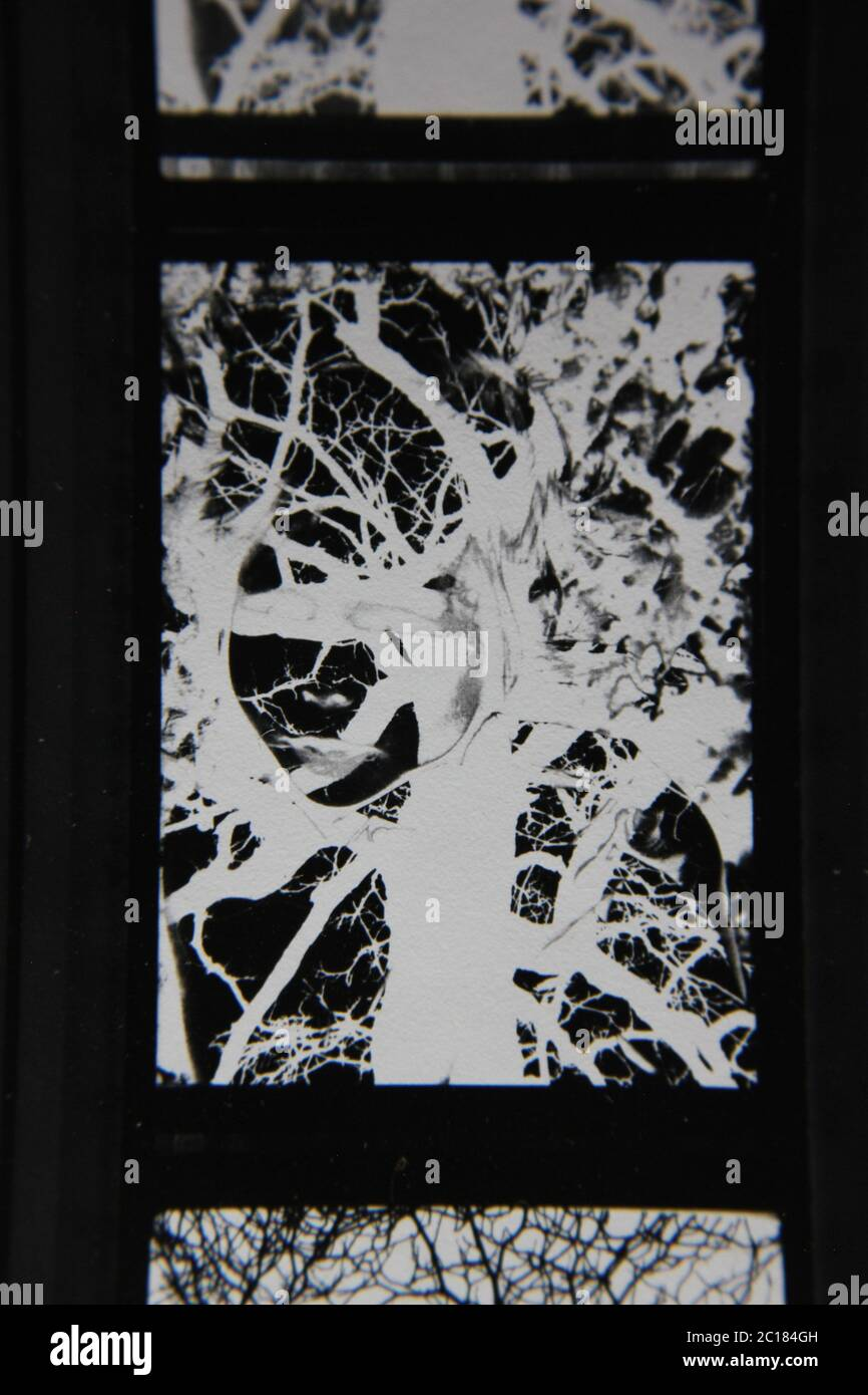 Fine 70s vintage contact print black and white extreme photography of a haunted and glowing tree. Stock Photo