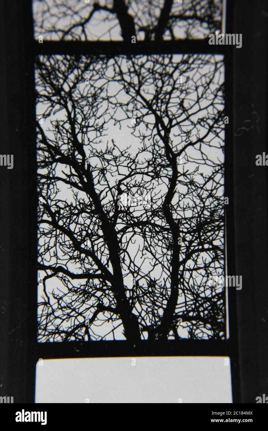 Fine 70s vintage contact print black and white extreme photography Stock Photo