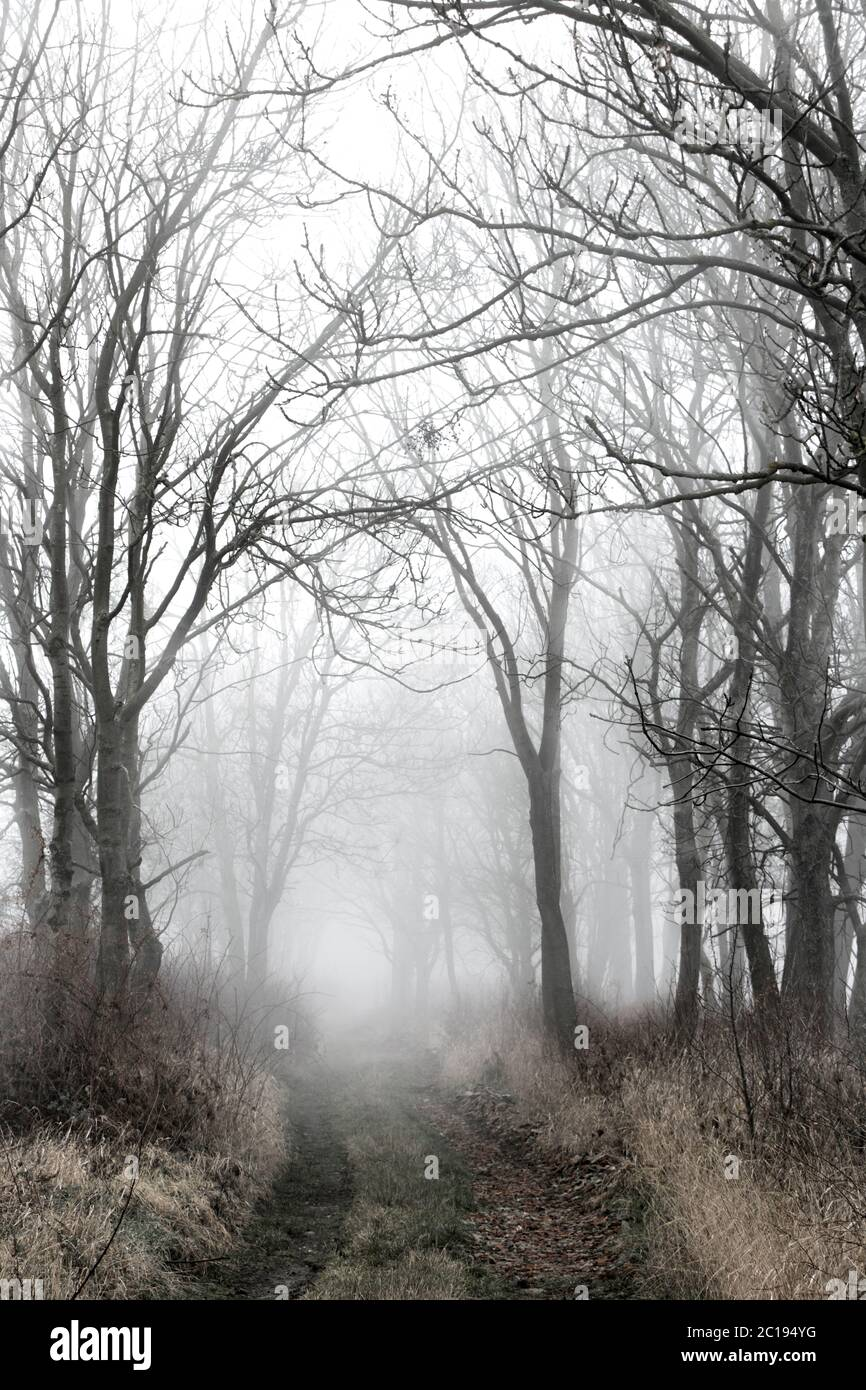 Alley In Fog With Silhouette Of Trees Autumn Trail A Path Through A Forest With Dense Fog Mysterious Pathway Footpath Is Vanishing In Mist Stock Photo Alamy Autumn fog trees forest alley road