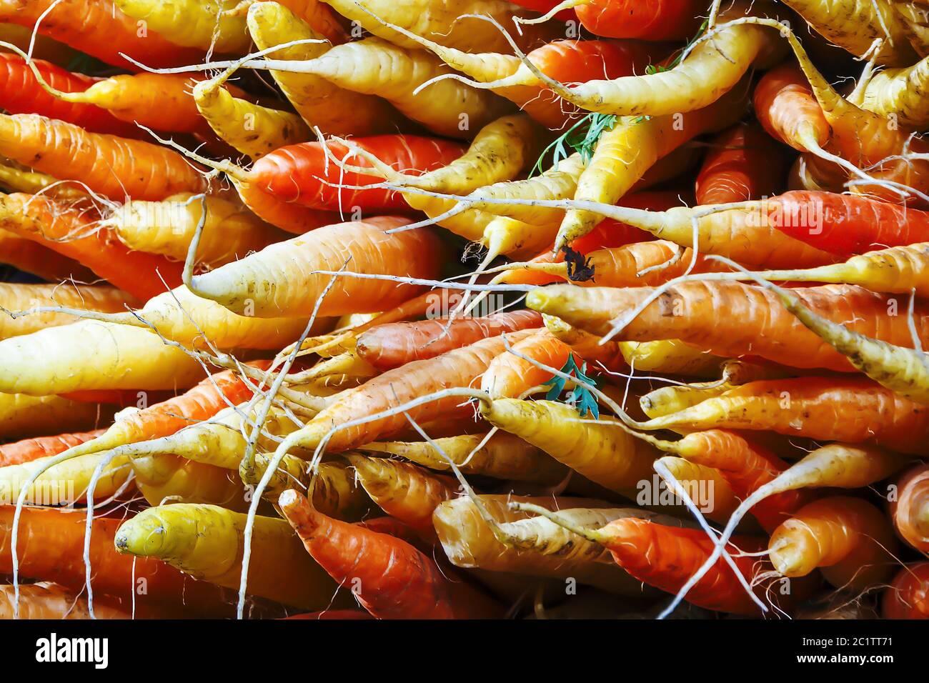 Bunch of organic carrots Stock Photo