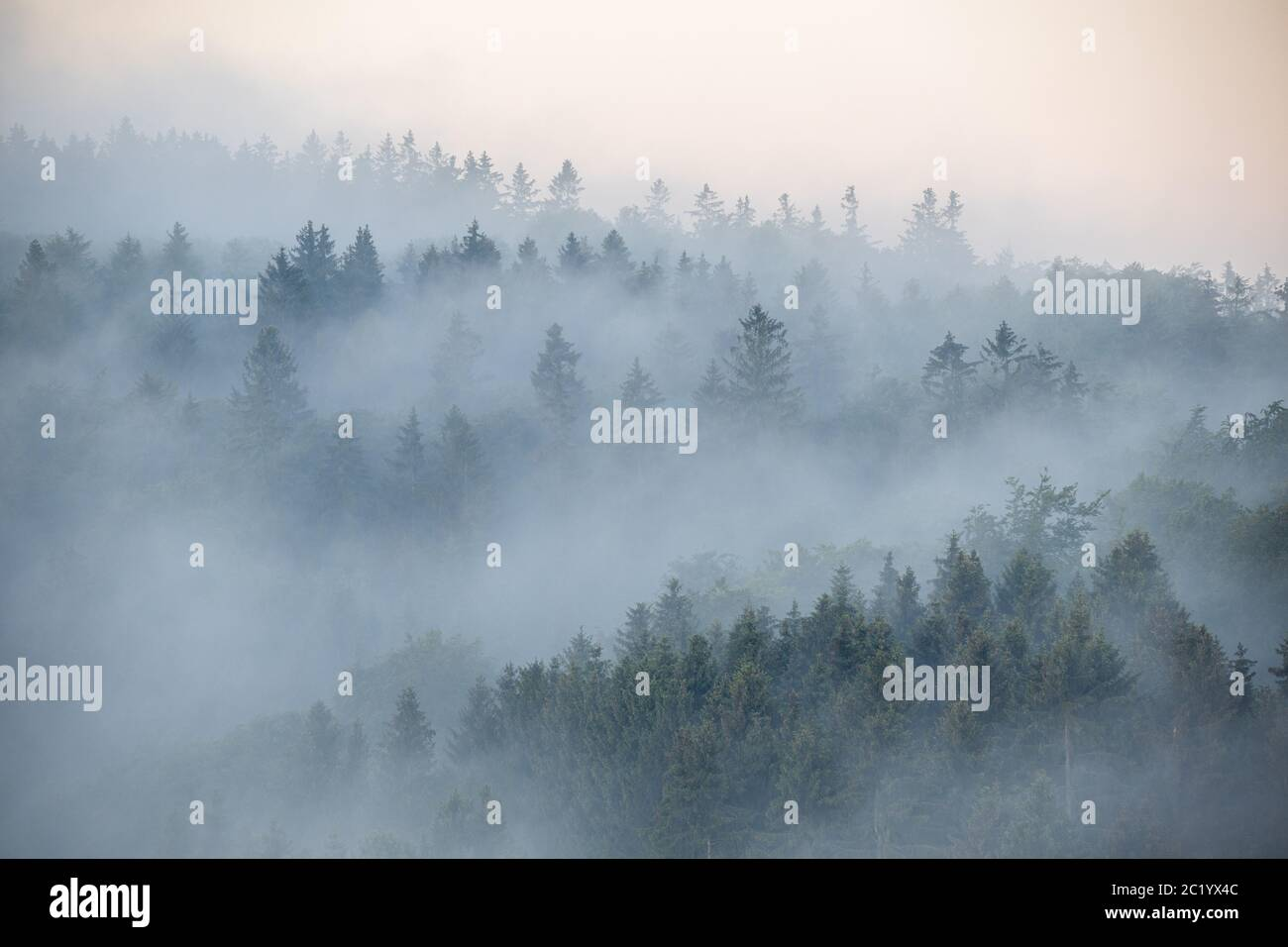 June 12th, 2020, Schwithten (Hessen): Fog is early in the morning over the spruce trees in the forest near Schwithten Seelenberg. | usage worldwide Stock Photo