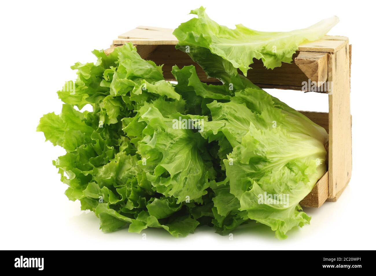 freshly harvested endive in a wooden box on a white background Stock Photo