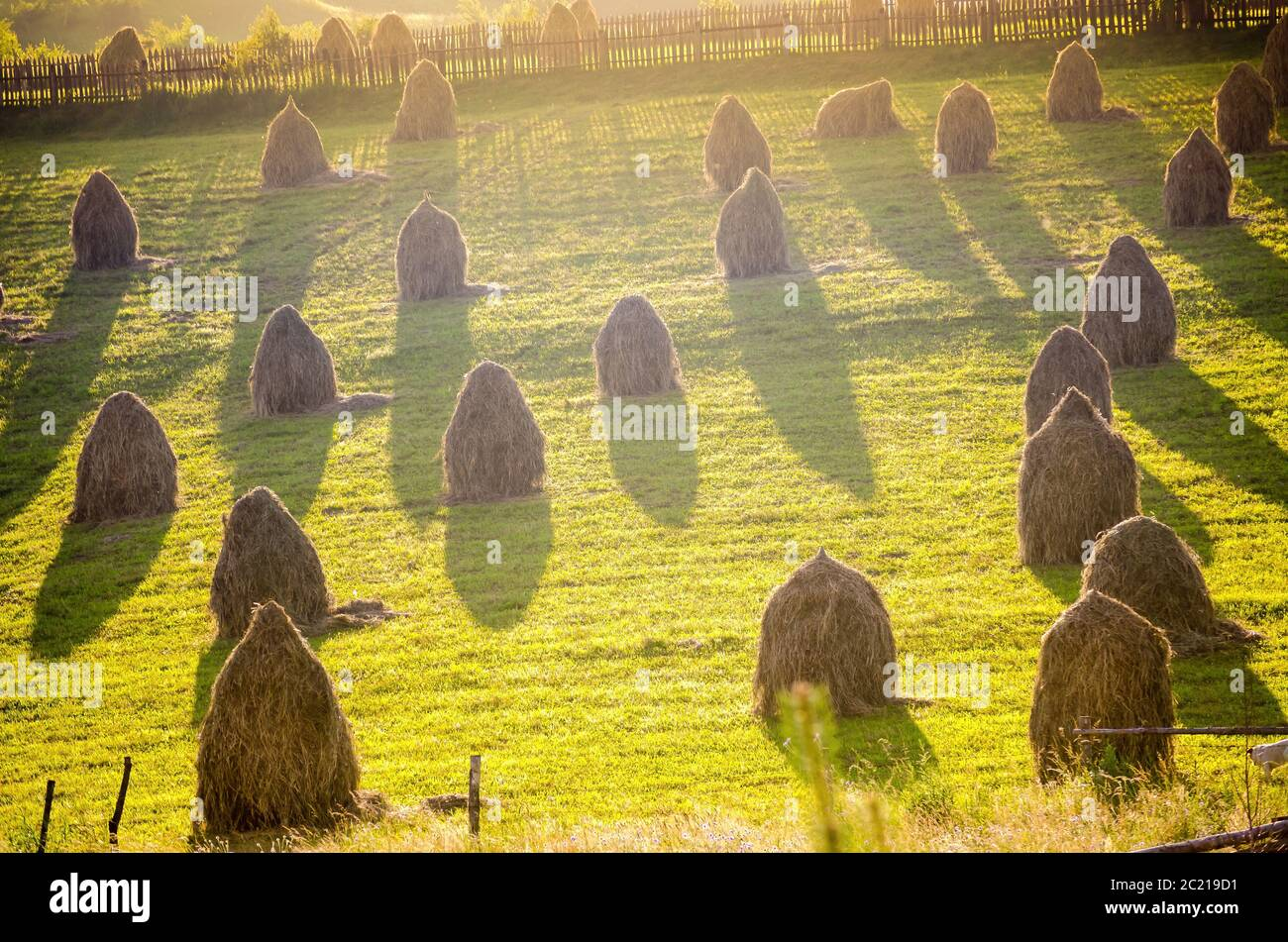 High angle of stacks of dry grass located in green agricultural field in sunny evening in Gura Humorului, Romania Stock Photo