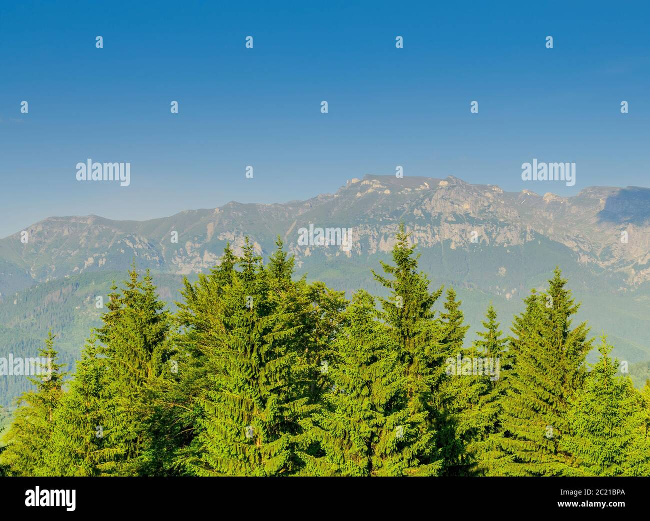 Green trees of forest growing near mountain range against blue sky on sunny day in nature Stock Photo