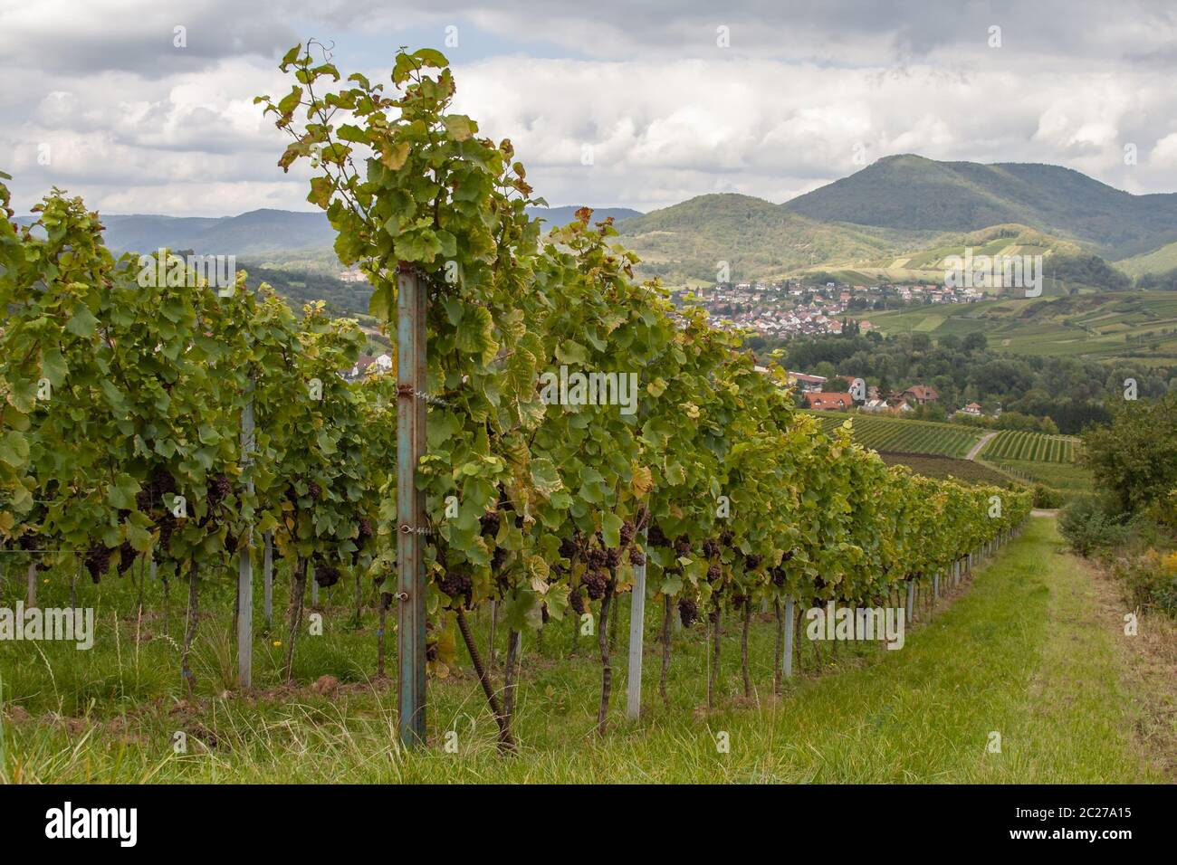 In the Southern Palatinate Stock Photo