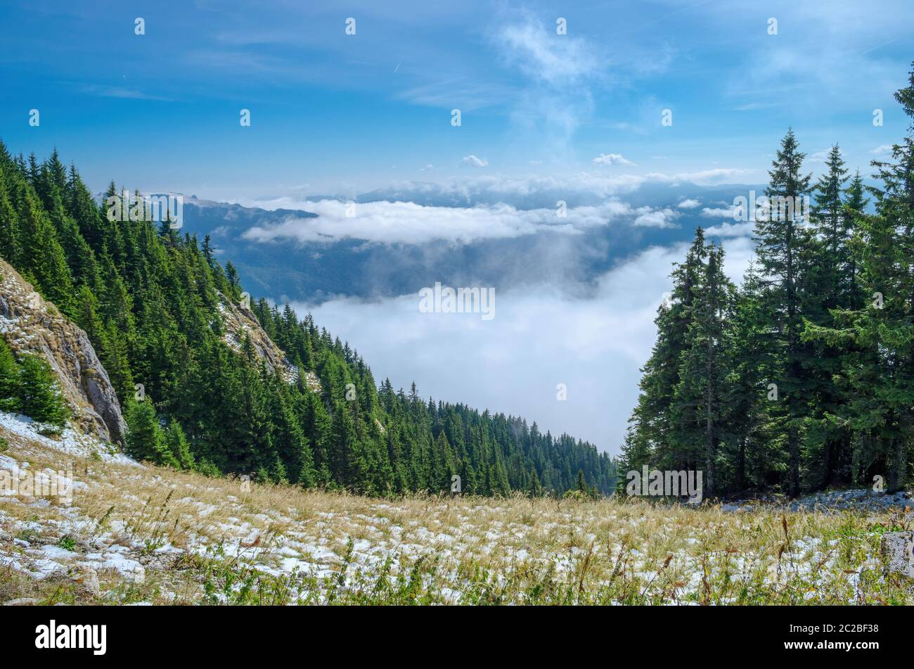 Green trees growing in grassy valley against cloudy sky on sunny day in Carpathian mountains in Romania Stock Photo