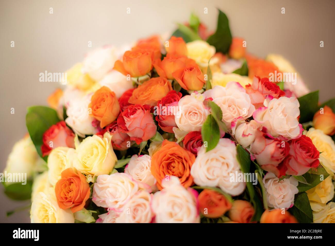 Colorful roses arranged in elegant bouquet and placed on beige background in studio Stock Photo