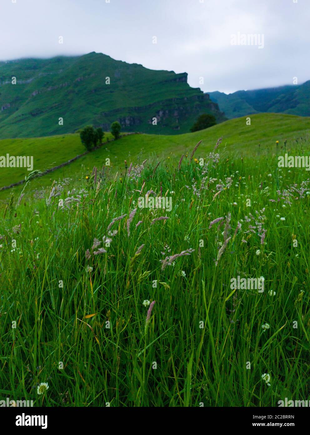Spring landscape of pasiegas cabins and meadows in the Miera Valley in the Autonomous Community of Cantabria. Spain, Europe Stock Photo