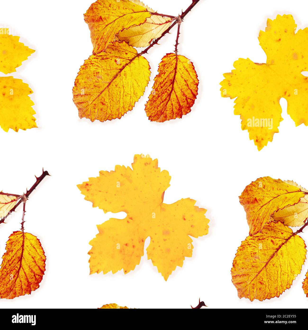 A seamless autumn pattern of yellow and orange fall leaves on a white background, a vibrant repeat print Stock Photo