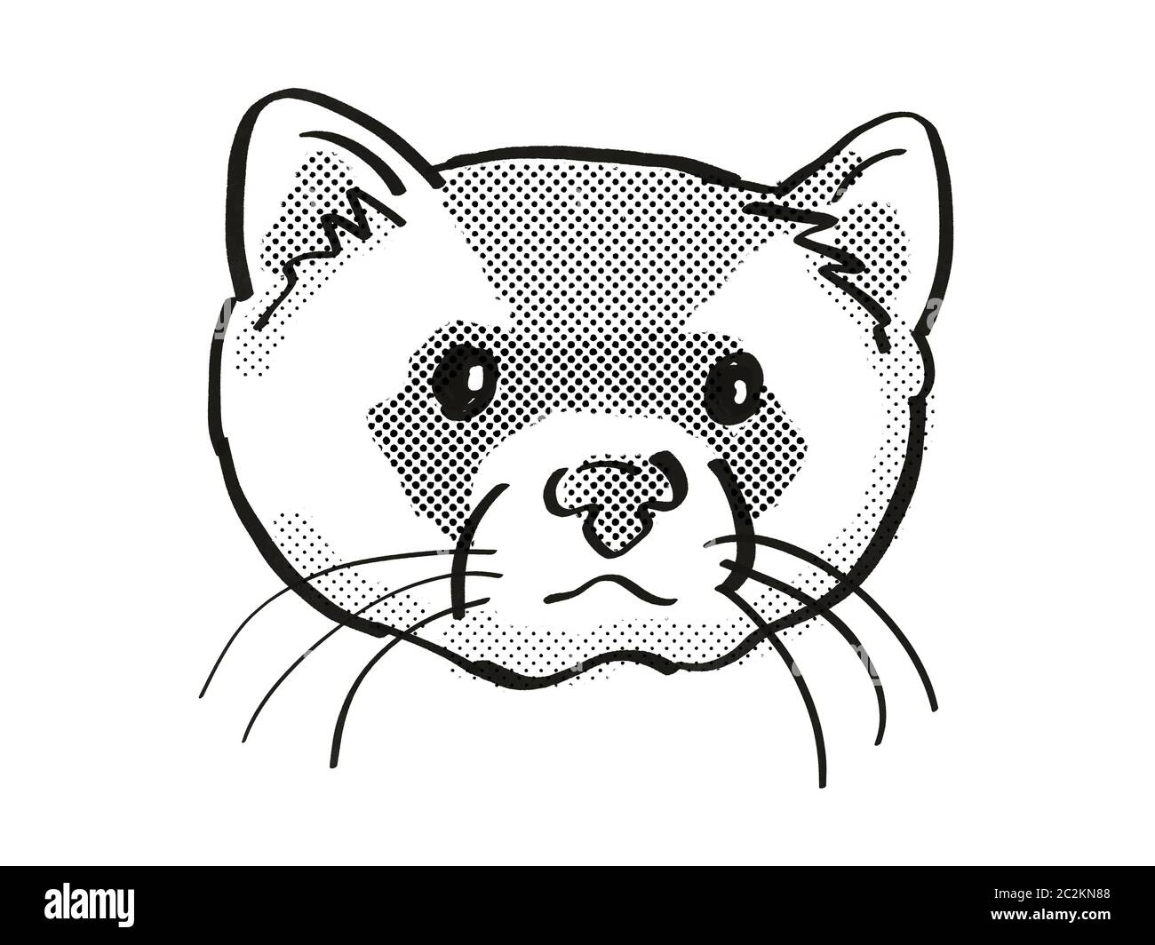 Retro Cartoon Mono Line Style Drawing Of Head Of A Black Footed Ferret American Polecat Or Prairie Dog Hunter And An Endangered Wildlife Species On I Stock Photo Alamy,How Long Do Cats Live In A House