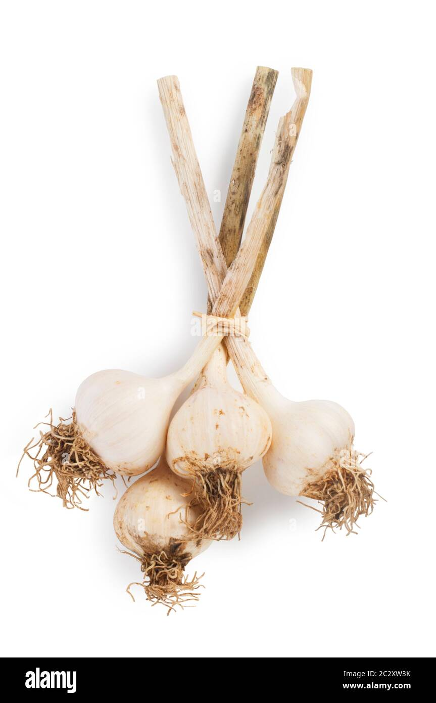 Studio shot of fresh garlic cut out against a white background - John Gollop Stock Photo