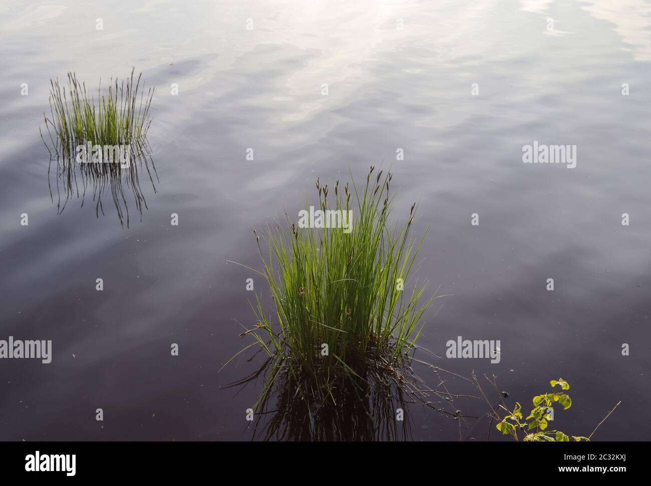 Beautiful landscape at the coast of a lake with a reflective water surface and some grass and reed Stock Photo