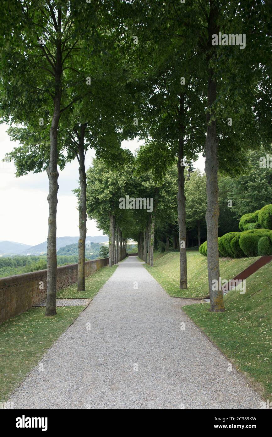 Footpath Between Tall Trees in The Park Stock Photo