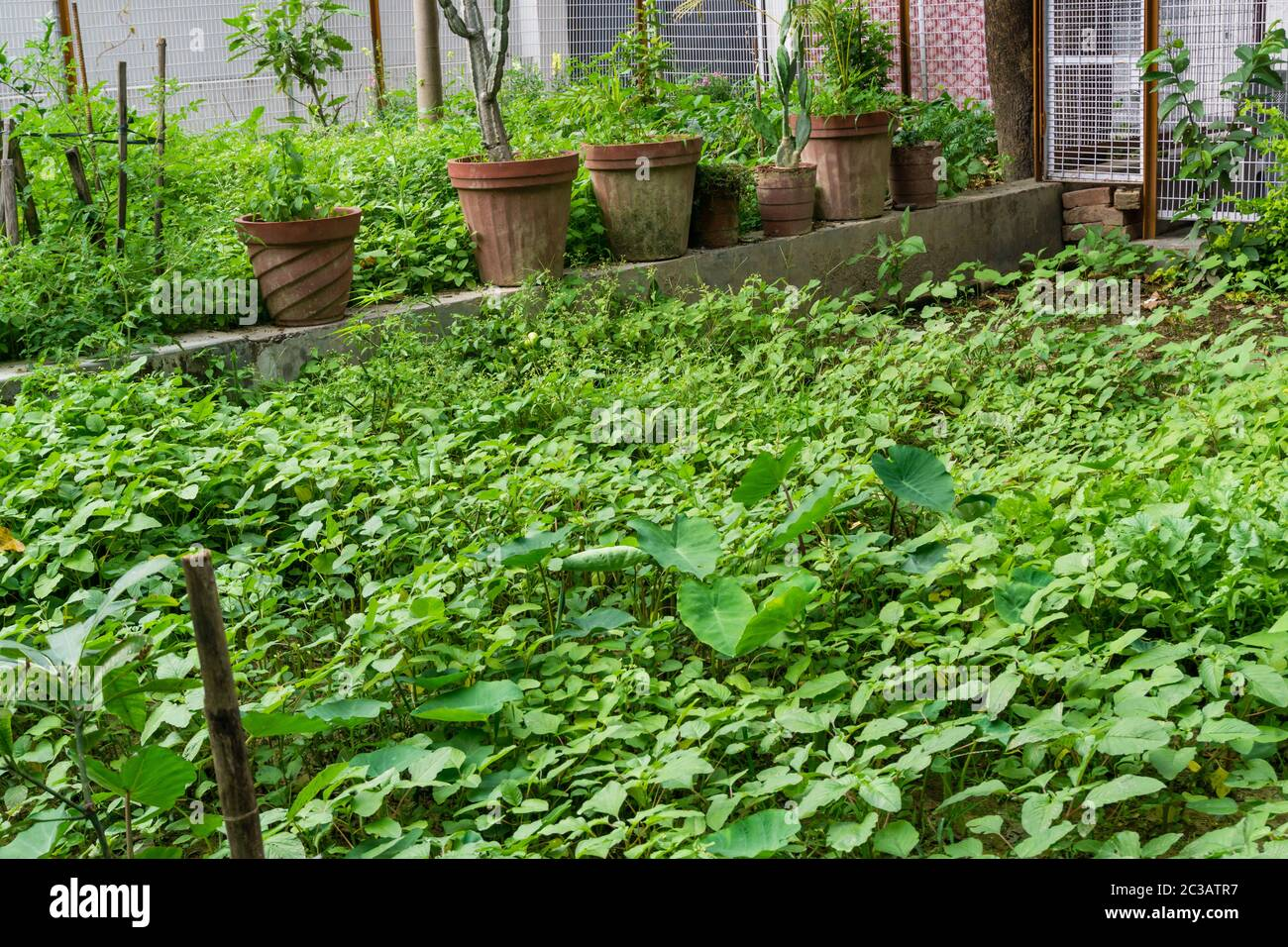 Home India Garden High Resolution Stock Photography And Images Alamy