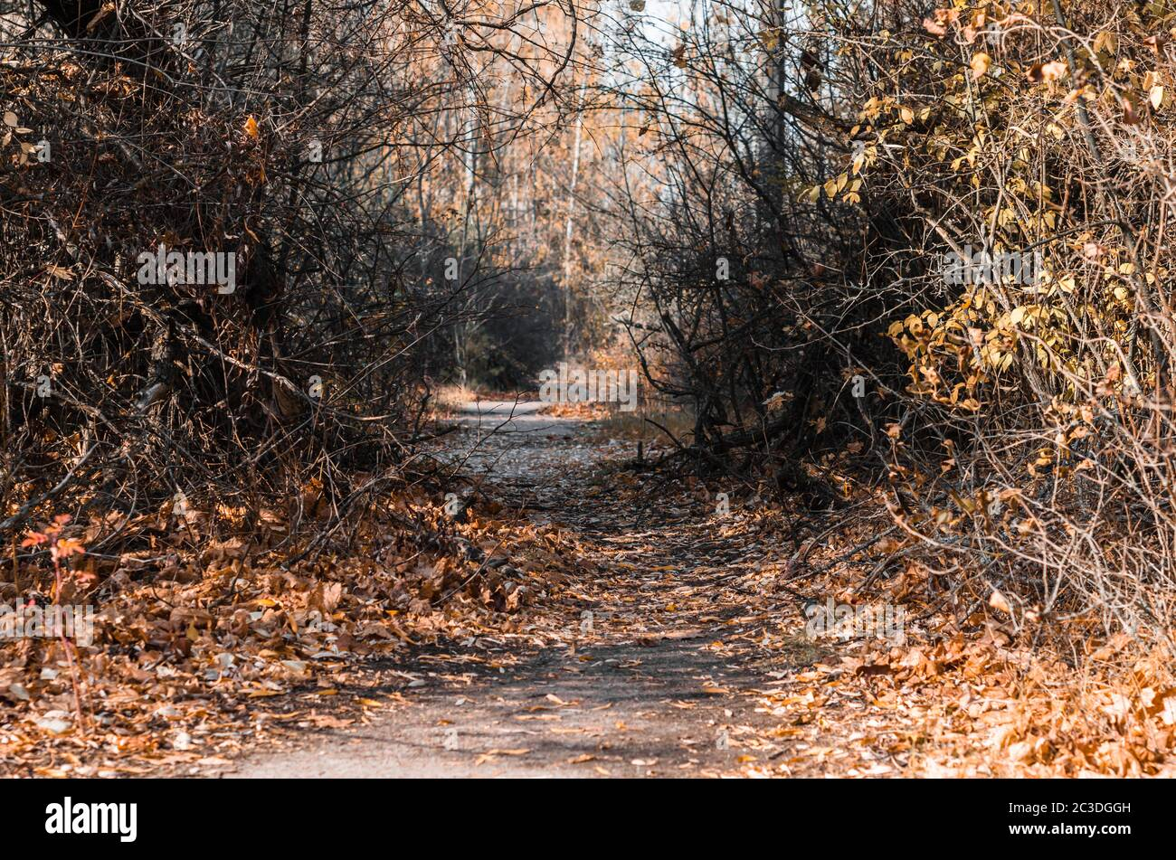 street in the city of Chernobyl in autumn Stock Photo