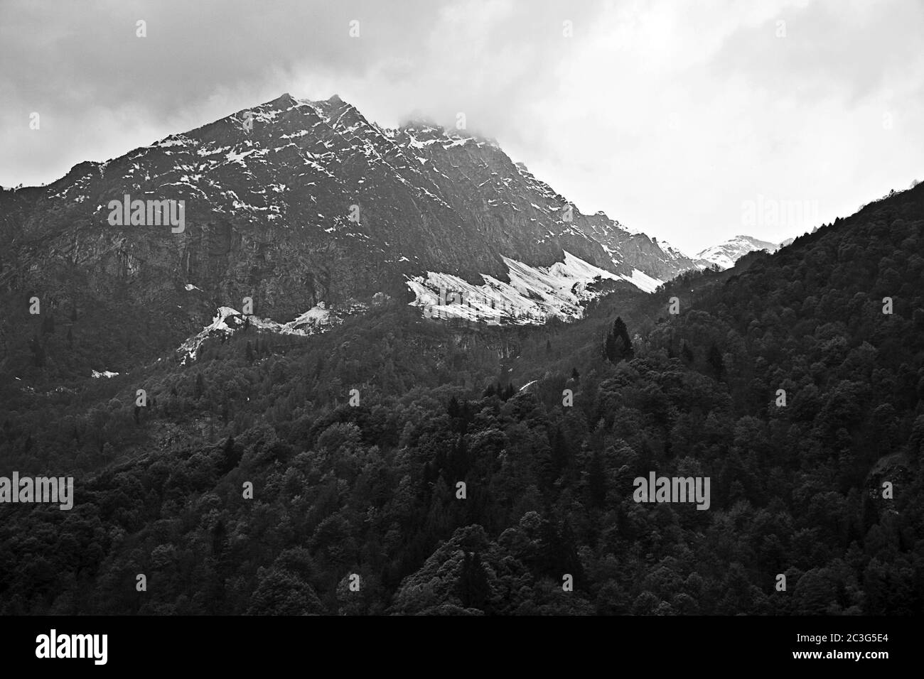 A Grayscale Shot Of A Beautiful Landscape With A Forest And High Rocky Mountains Stock Photo Alamy