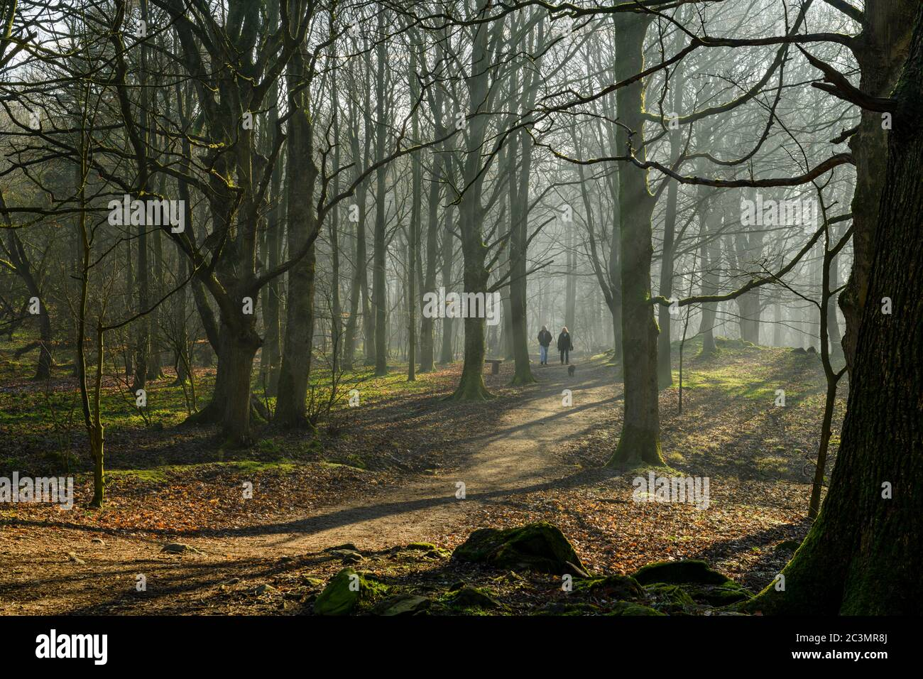 Rays or shafts of sunlight, misty morning, trees & dog walkers on path - quiet scenic woodland, Middleton Woods, Ilkley, West Yorkshire, England, UK. Stock Photo