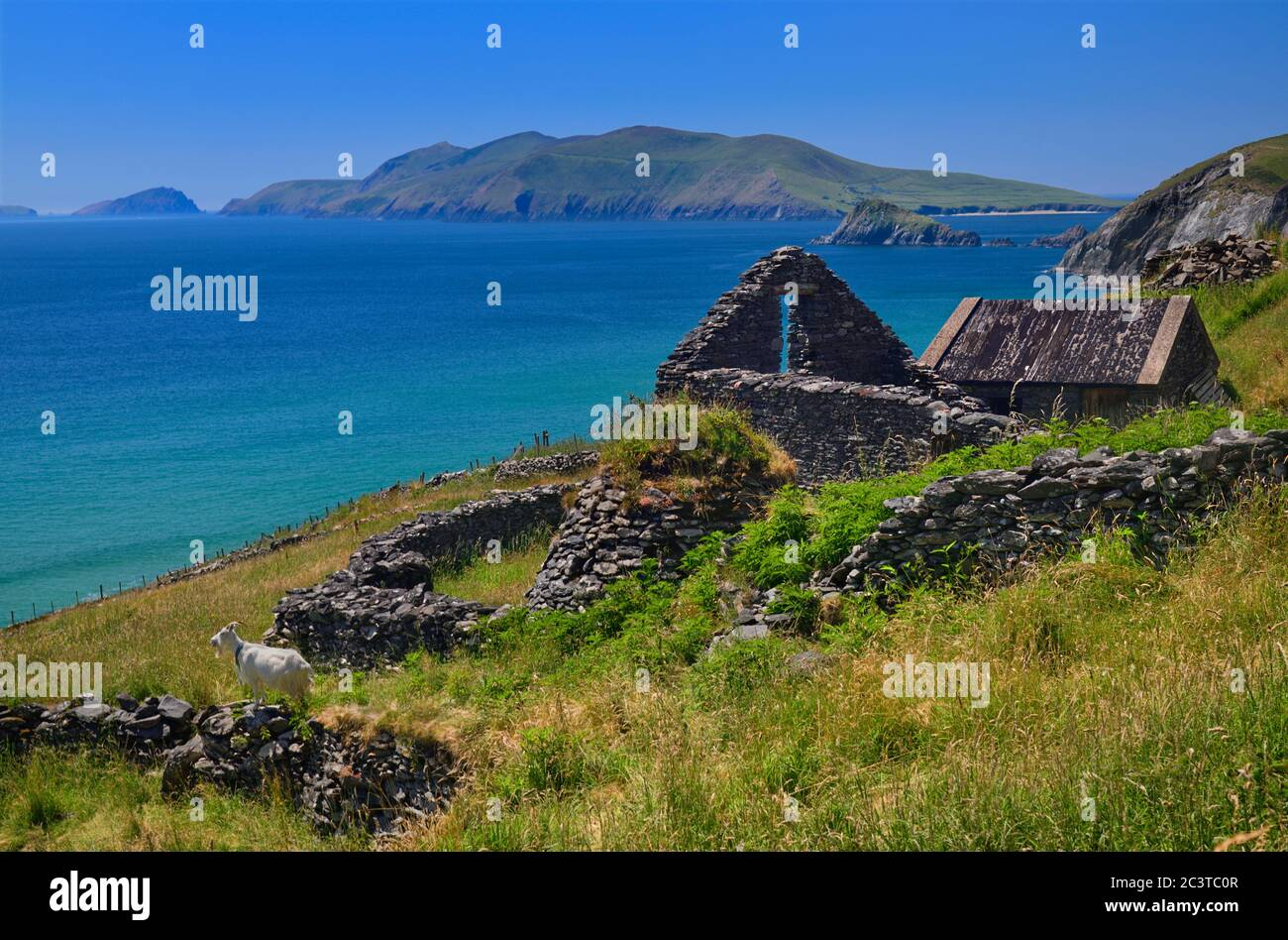 Ireland, County Kerry, Abandoned houses near Slea Head with a tethered goat admiring the view and the Blasket Islands in the background. Stock Photo