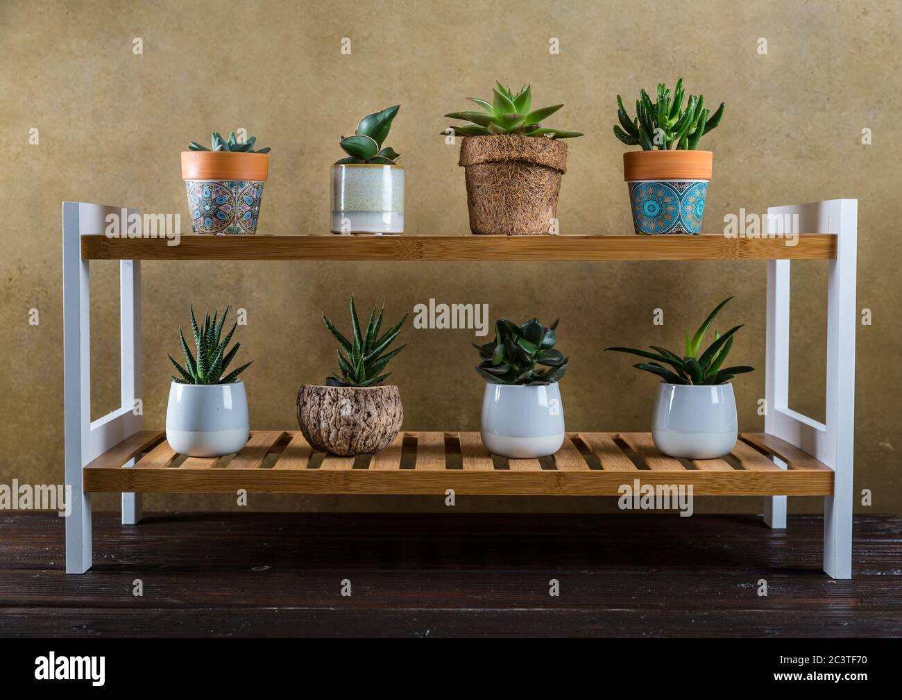 Succulent Shelf High Resolution Stock Photography And Images Alamy