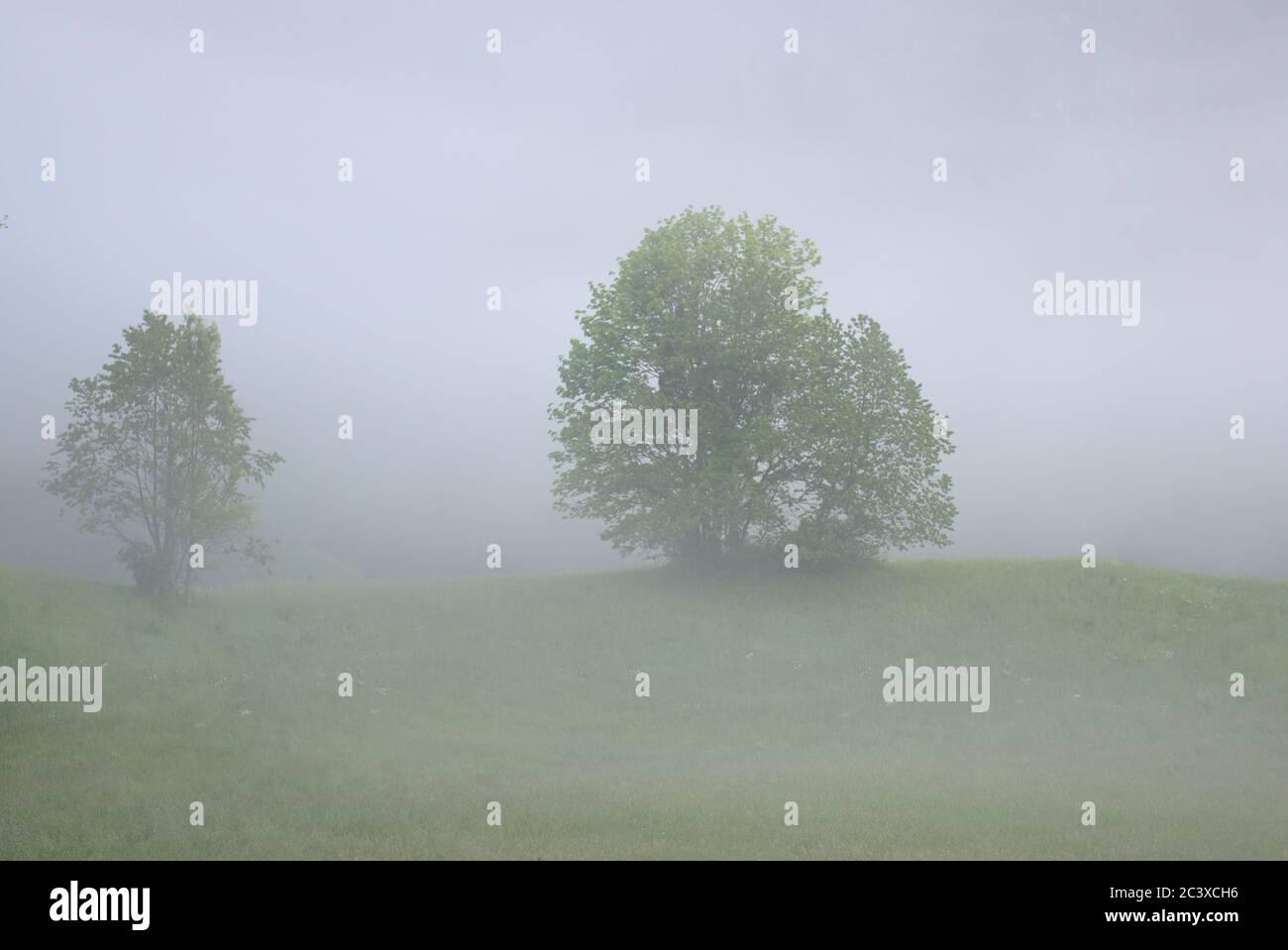 Bäume im Nebel auf einem Hügel Stock Photo