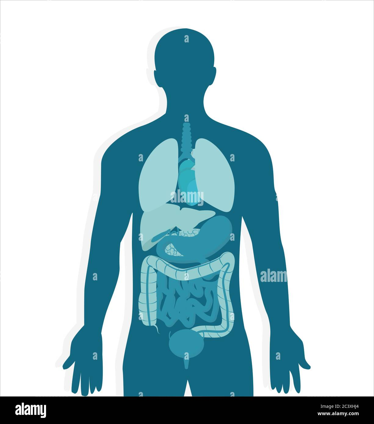 human body anatomy vector image of male internal organs in blue colors stock vector image art alamy https www alamy com human body anatomy vector image of male internal organs in blue colors image363846284 html