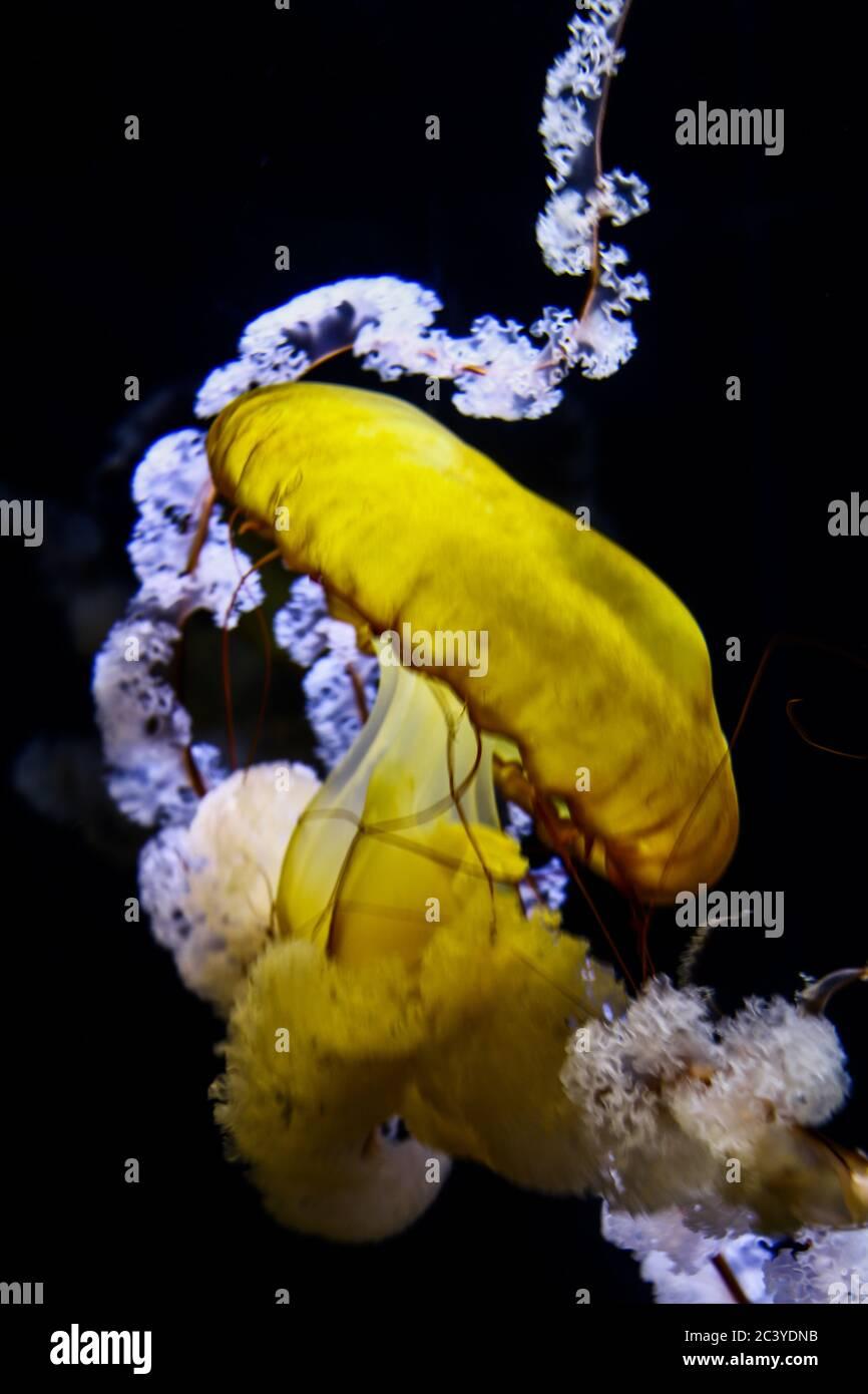 Beautiful aquatic animals dancing through the waters Stock Photo