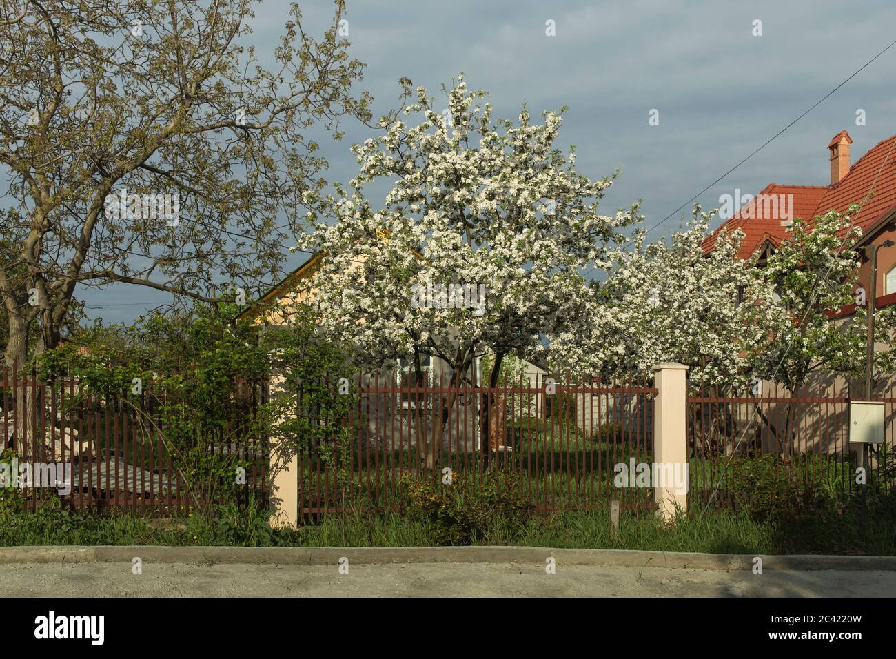 Apple Trees In Bloom High Resolution Stock Photography And Images Alamy
