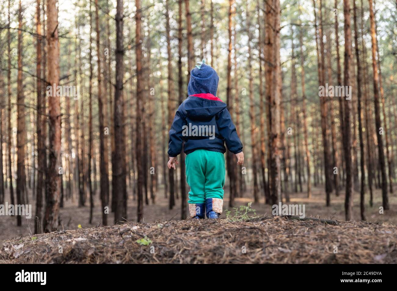 Cute adorable caucasian lonely toddler baby boy standing alone on hill during walk in fall coniferous pine woods at day time. Child lost in forest Stock Photo