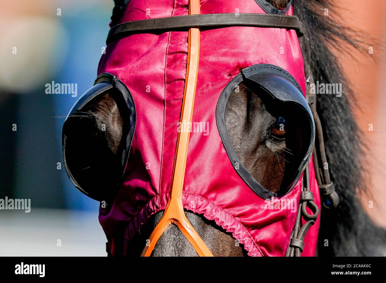 A general view of red blinkers on a runner at Leicester Racecourse. Stock Photo
