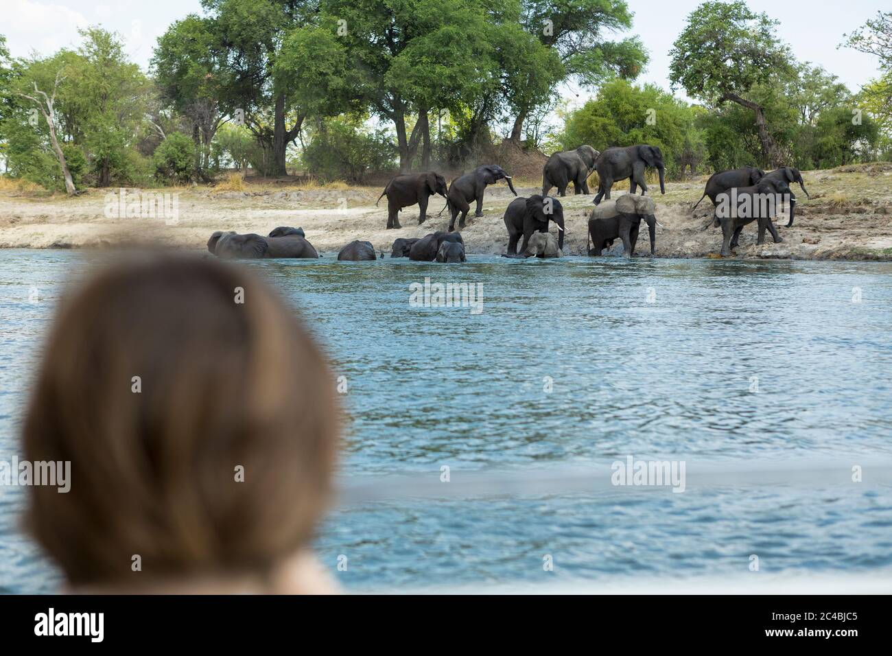 A boy watching a herd of elephant come down to a water hole. Stock Photo