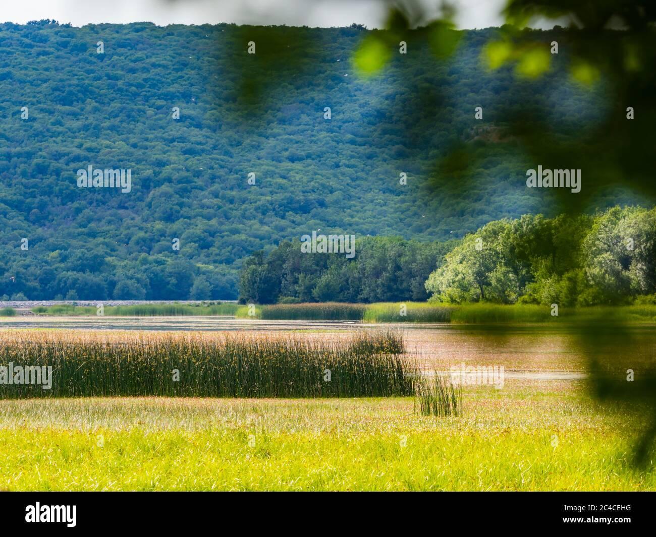 Swampy lake behind tree branch Ponikve island Krk Croatia Europe Stock Photo