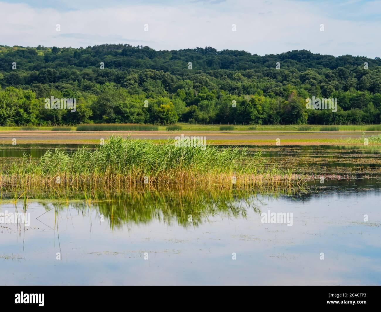 Swampy lake mirror image mirroring Ponikve island Krk Croatia Europe Stock Photo