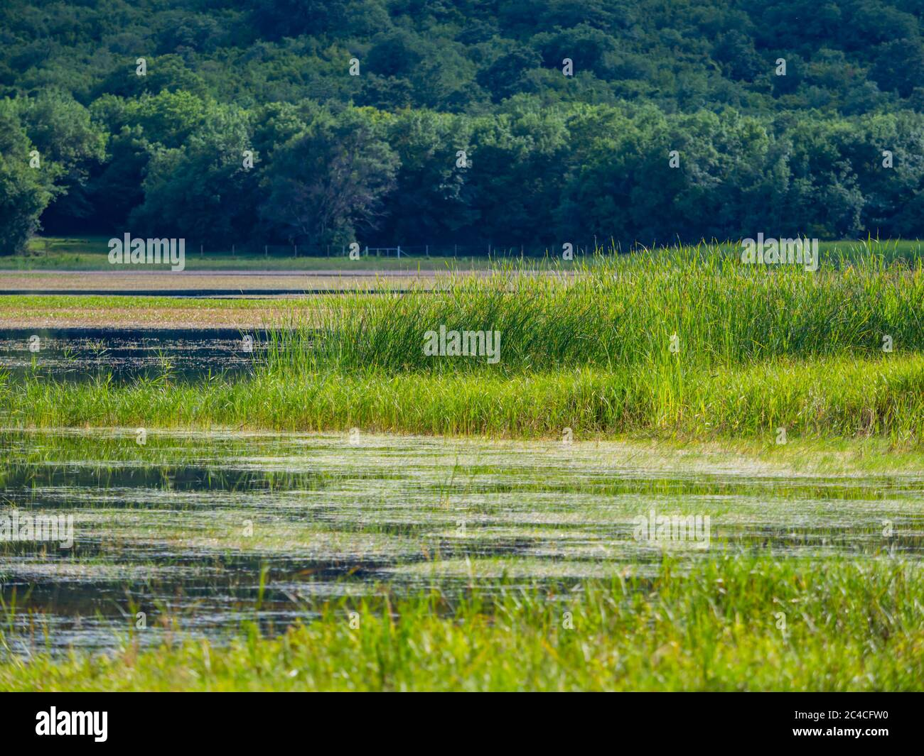 Swampy lake Ponikve island Krk Croatia Europe Stock Photo