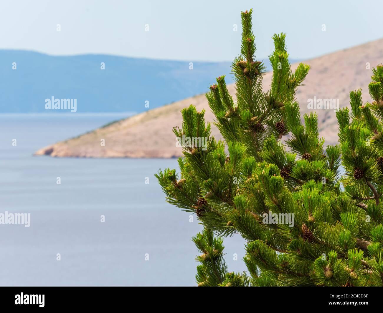 Coastline near Stara Baska island Krk Croatia Europe Stock Photo